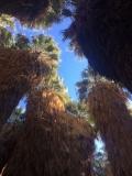 1000-Palms-2