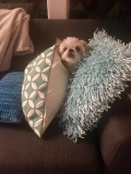 Molly-cushions