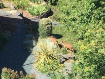 Deer-and-two-fawns