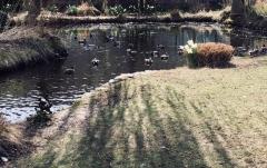 Iroquois-Park